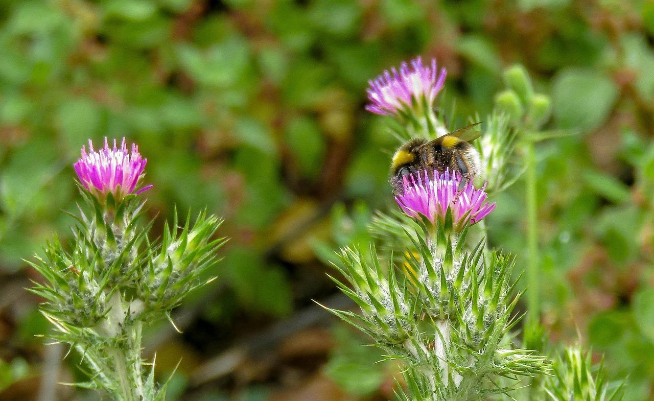Raccogliere erbe e piante selvatiche
