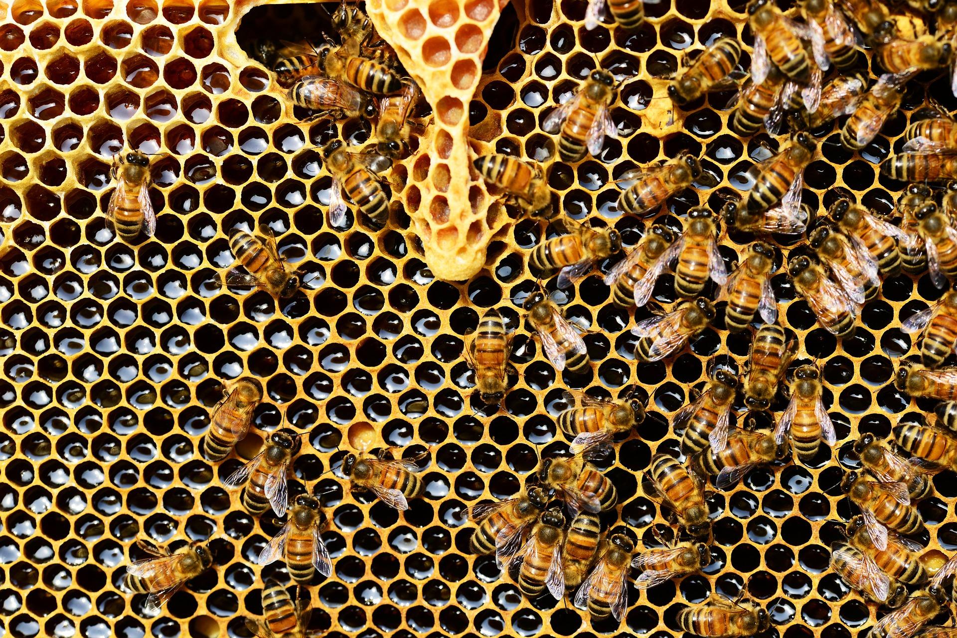Il miele per curarsi